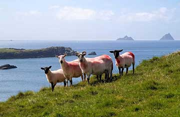 Locals on the Ring of Kerry, Ireland